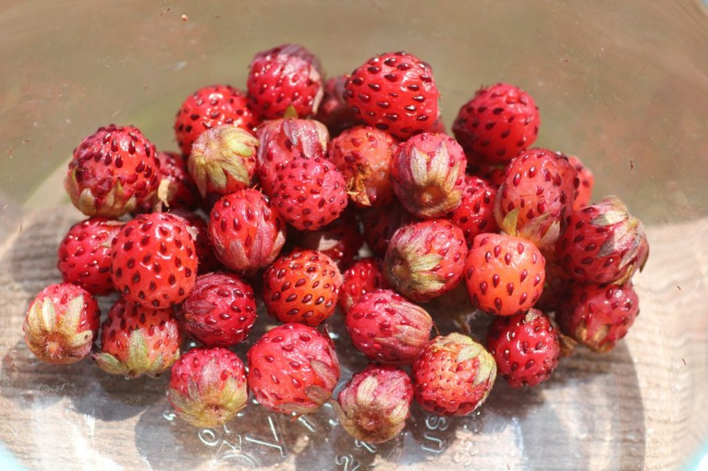 Wild-Strawberries-02